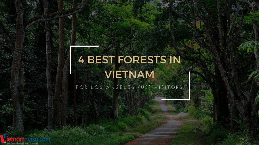 Top 4 forests in Vietnam that Los Angeles (US) visitors should not miss
